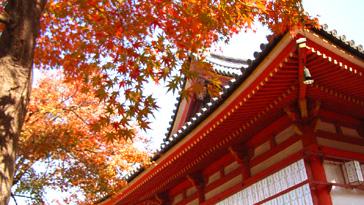 天王寺区にも紅葉が楽しめて気軽に行ける場所があります!恋愛成就で有名な愛染さんでもみじがきれいに色づくみたいです!