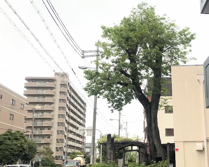 阿倍野区倒木