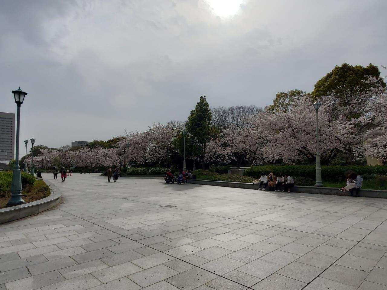 天王寺公園桜