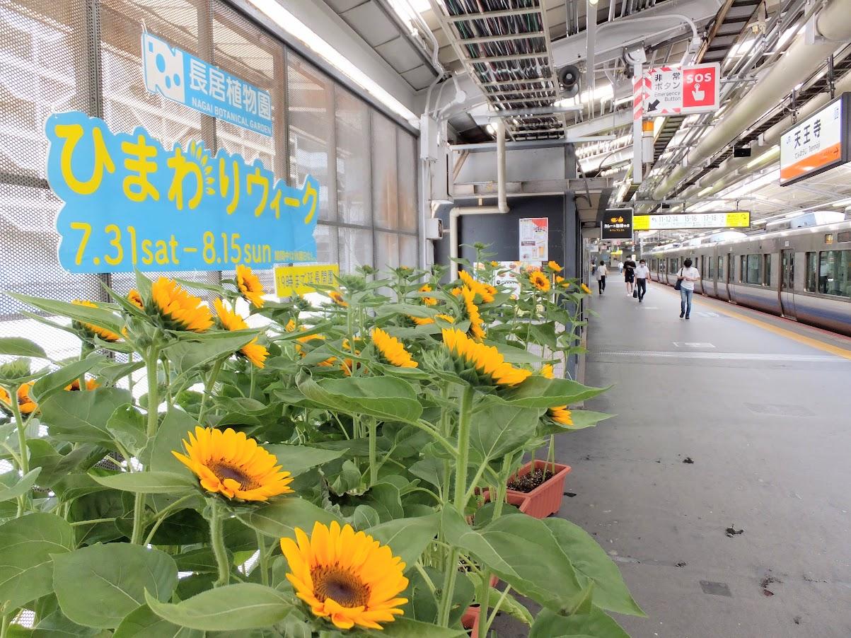 天王寺駅ひまわり